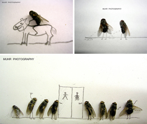 Magnus-muhr-dead-fly-photography-4-1