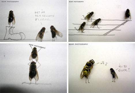 Magnus-muhr-dead-fly-photography